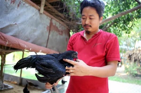 Cận cảnh gà 'mặt quỷ' đắt nhất thế giới ở Việt Nam - ảnh 4