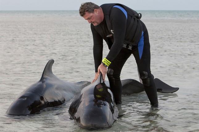 Bí ẩn đằng sau câu chuyện cá voi dạt bờ 'tự sát' hàng loạt - ảnh 5