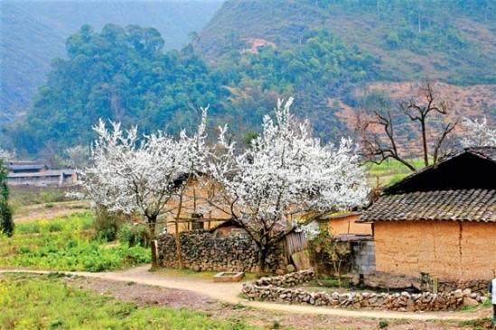 Gợi ý 5 điểm ngắm hoa mận đẹp ở vùng Tây Bắc - ảnh 5