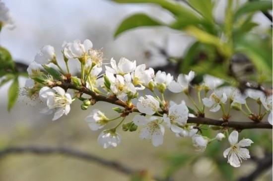 Gợi ý 5 điểm ngắm hoa mận đẹp ở vùng Tây Bắc - ảnh 1