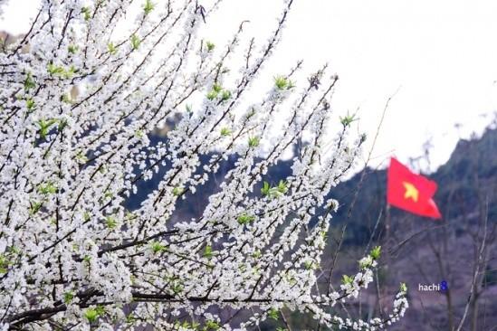 Gợi ý 5 điểm ngắm hoa mận đẹp ở vùng Tây Bắc - ảnh 2