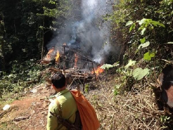 Nghệ An: 'Lâm tặc' tuyên bố dùng 'luật rừng' xử 2 lãnh đạo phòng hộ - ảnh 1