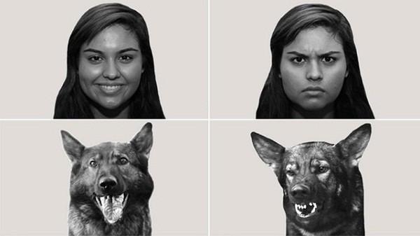 Khoa học chứng minh loài chó có thể hiểu được cảm xúc của con người - ảnh 2