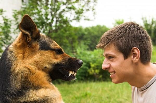 Khoa học chứng minh loài chó có thể hiểu được cảm xúc của con người - ảnh 3