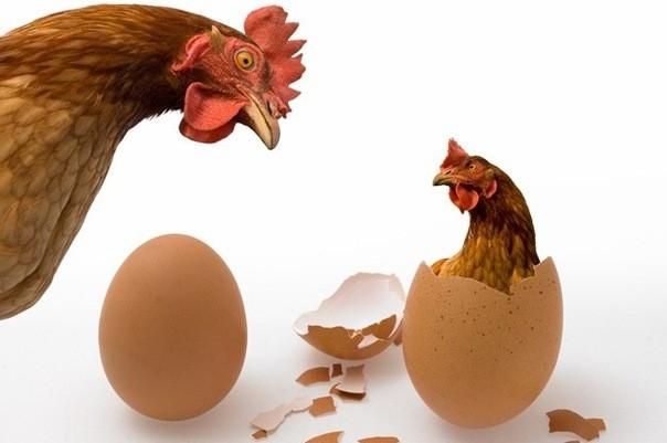 Đáp án thú vị cho câu hỏi: Trứng có trước hay gà có trước? - ảnh 1
