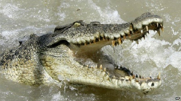 Bị cá sấu nuốt chửng cánh tay khi ngồi hóng mát bên sông - ảnh 1