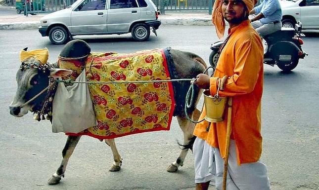 Những nguyên tắc kỳ lạ bắt buộc phải biết khi du lịch Ấn Độ - ảnh 3