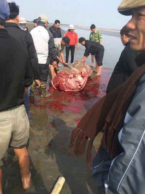 Sự thật vụ CÁ ÔNG bị người dân xẻ thịt khi dạt bờ ở Nam Định - ảnh 4