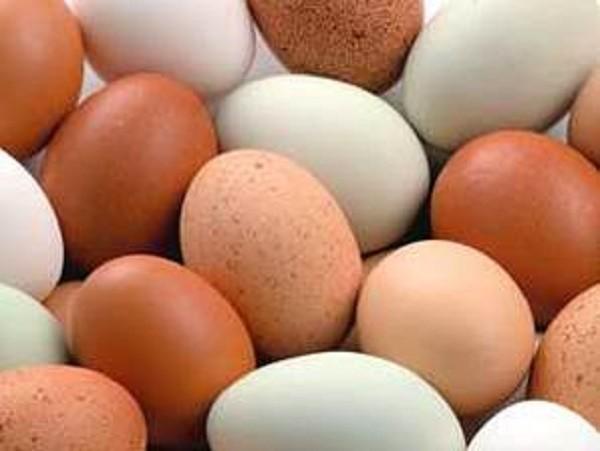 Trứng gà vỏ đỏ hay vỏ trắng tốt hơn? - ảnh 1
