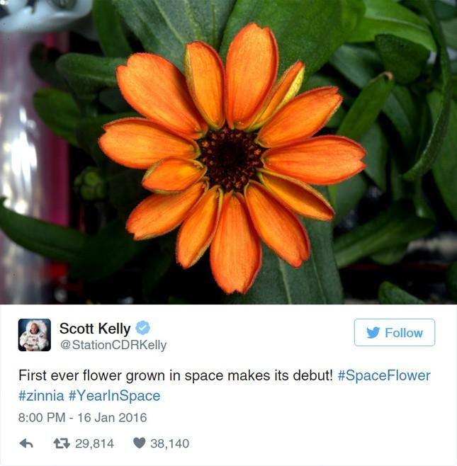 Bông hoa đầu tiên của NASA nở trong không gian - ảnh 1