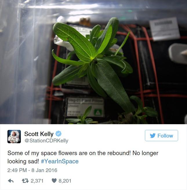 Bông hoa đầu tiên của NASA nở trong không gian - ảnh 2