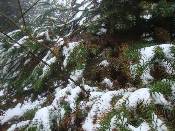5 điểm có thể ngắm tuyết rơi đẹp như ở trời Tây tại Việt Nam - ảnh 5