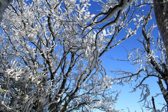 5 điểm có thể ngắm tuyết rơi đẹp như ở trời Tây tại Việt Nam - ảnh 7