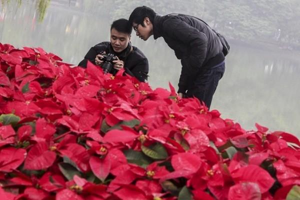 Ngắm Hà Nội rực rỡ cờ hoa dịp Đại hội Đảng 12 - ảnh 14