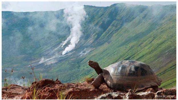 Những sự thật chưa ai biết về các 'cụ rùa' khổng lồ - ảnh 2