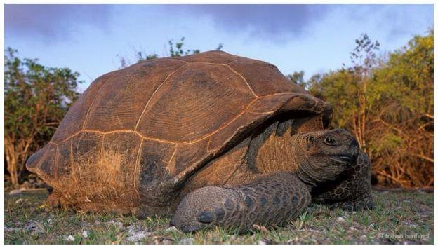 Những sự thật chưa ai biết về các 'cụ rùa' khổng lồ - ảnh 3