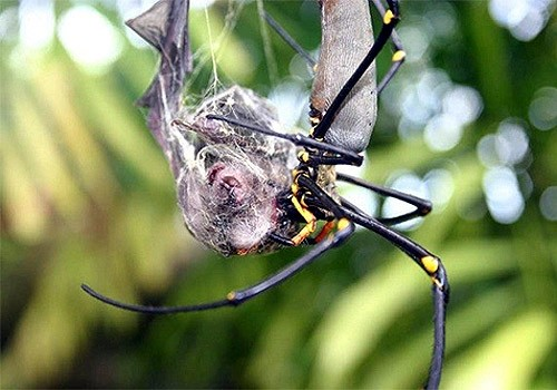 Những sự thật không khỏi rùng mình về loài nhện - ảnh 1