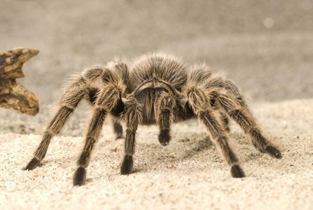 Những sự thật không khỏi rùng mình về loài nhện - ảnh 3