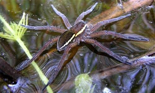 Những sự thật không khỏi rùng mình về loài nhện - ảnh 5