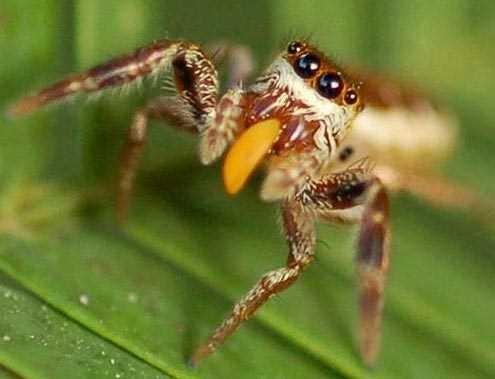 Những sự thật không khỏi rùng mình về loài nhện - ảnh 7
