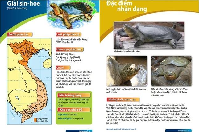 3 'hậu duệ' còn lại của rùa Hồ Gươm đang ở đâu? - ảnh 2