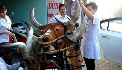 Đầu thú 'quý hiếm' giá rẻ xuống đường phố Sài Gòn - ảnh 1
