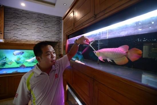 Thú vui săn cá vàng 9999 chục triệu của đại gia - ảnh 2