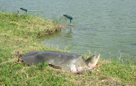 Một số hình ảnh đáng nhớ về cụ rùa của PGS Hà Đình Đức - ảnh 3