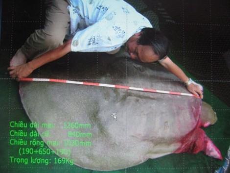 Một số hình ảnh đáng nhớ về cụ rùa của PGS Hà Đình Đức - ảnh 6