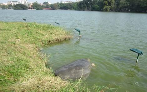 Một số hình ảnh đáng nhớ về cụ rùa của PGS Hà Đình Đức - ảnh 7