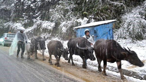 Người dân Mù Cang Chải vất vả chống chọi với tuyết rơi - ảnh 4