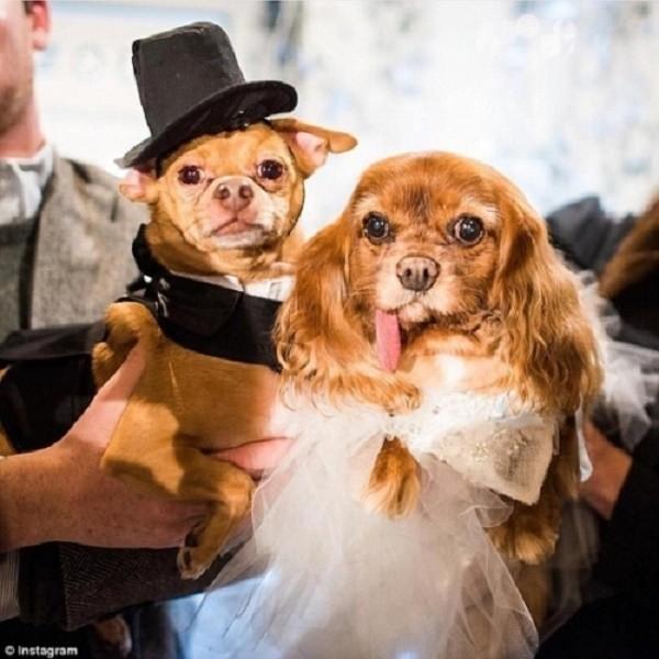 Váy cưới hơn 200 triệu, vòng cưới 2,9 tỷ của cặp chó nổi tiếng - ảnh 1