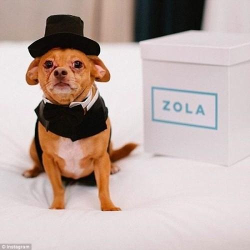 Váy cưới hơn 200 triệu, vòng cưới 2,9 tỷ của cặp chó nổi tiếng - ảnh 2