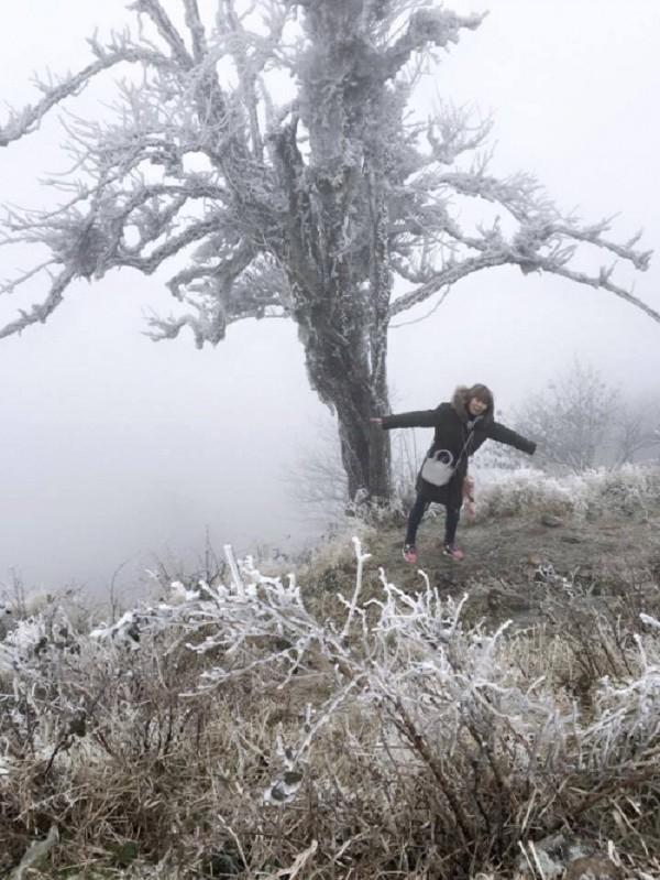 Chùm ảnh băng tuyết phủ trắng đỉnh Phja Oắc, Cao Bằng - ảnh 1