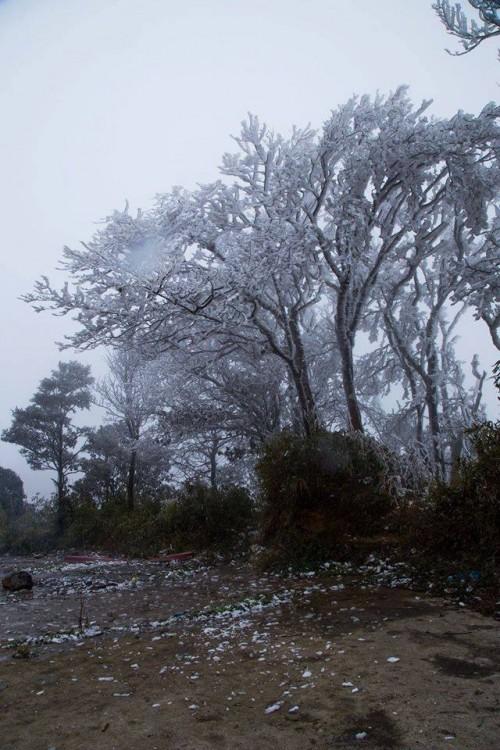Chùm ảnh băng tuyết phủ trắng đỉnh Phja Oắc, Cao Bằng - ảnh 8