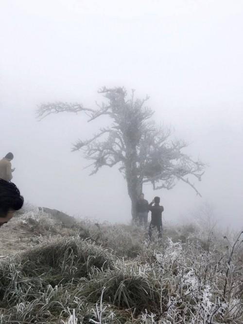 Chùm ảnh băng tuyết phủ trắng đỉnh Phja Oắc, Cao Bằng - ảnh 4