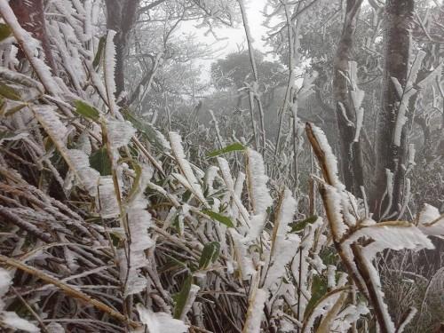 Chùm ảnh băng tuyết phủ trắng đỉnh Phja Oắc, Cao Bằng - ảnh 3