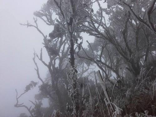 Chùm ảnh băng tuyết phủ trắng đỉnh Phja Oắc, Cao Bằng - ảnh 2