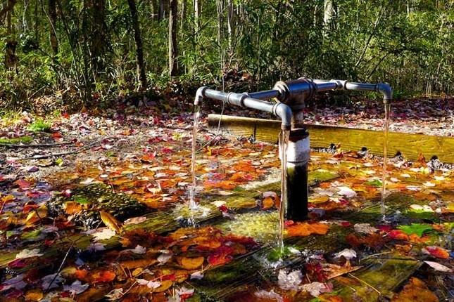 Xôn xao dòng suối có khả năng 'cải tử hoàn sinh' - ảnh 2