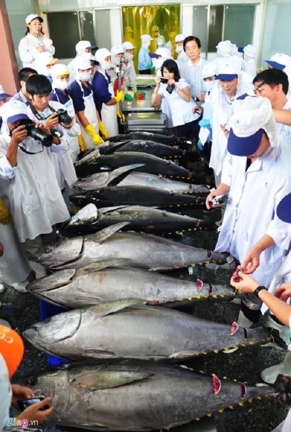 Con cá ngừ Việt Nam đầu tiên bán giá 12 triệu đồng ở Nhật - ảnh 1
