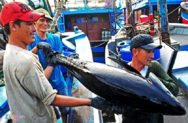 Con cá ngừ Việt Nam đầu tiên bán giá 12 triệu đồng ở Nhật - ảnh 2
