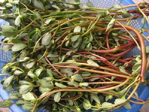 4 loại rau mọc hoang dễ tìm giúp bạn 'trường thọ' - ảnh 4