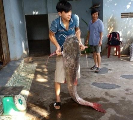 Bắt được cá lăng khổng lồ dài 1,7m ở Đắk Nông - ảnh 2