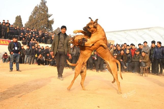 Kinh hoàng lễ hội chọi chó dã man ở Trung Quốc - ảnh 3