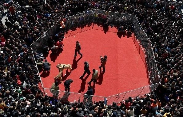 Kinh hoàng lễ hội chọi chó dã man ở Trung Quốc - ảnh 5