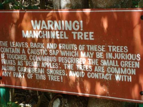 Khám phá 'loài cây chết chóc' nguy hiểm nhất hành tinh - ảnh 3