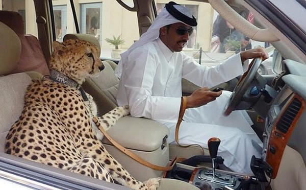 Những điều 'điên rồ' về sự giàu có khủng khiếp ở Dubai - ảnh 2