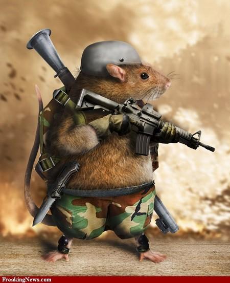 Nga dùng 'chiến binh chuột' thay người tấn công IS - ảnh 1