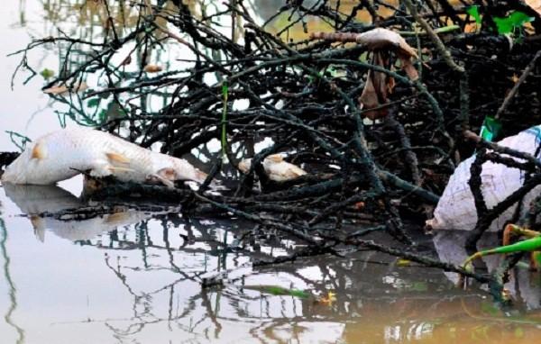 Hàng trăm hộ dân bất lực nhìn cá chết trắng sông  - ảnh 5