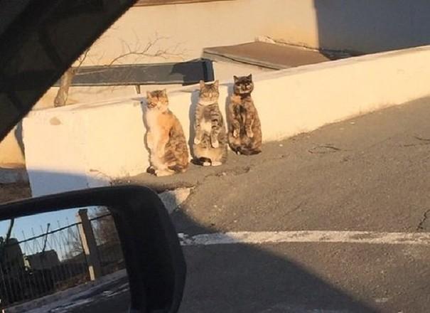 Phản ứng siêu đáng yêu của 3 chú mèo khi bị bắt quả tang - ảnh 2